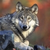 Совершенствование к лучшему - последнее сообщение от justwolf2137